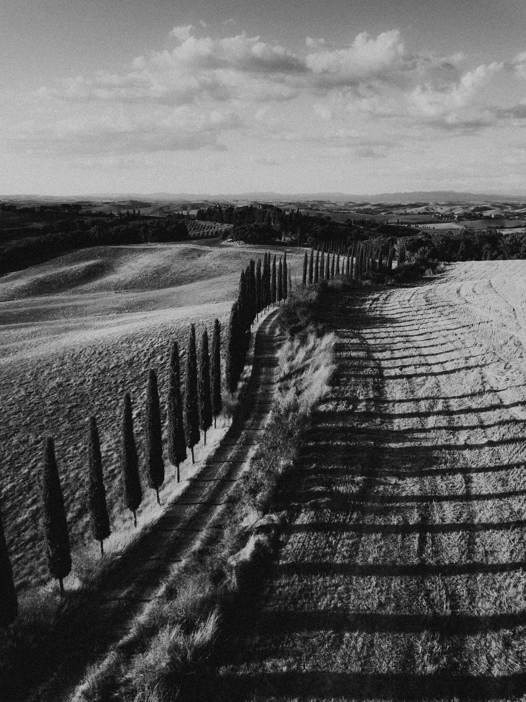 portrait drone photo of tuscany trees